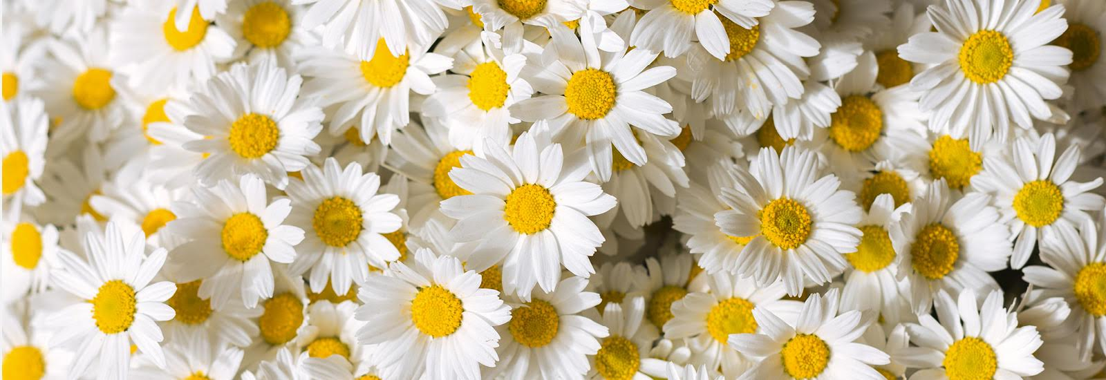Florists in Sandhurst | Flower Delivery by Daisy Chain
